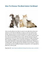 How To Choose The Best Indoor Cat Breed