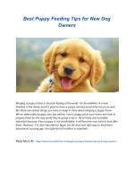 Best Puppy Feeding Tips for New Dog Owners