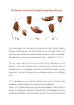 The German cockroach in Orange County- Roach Control