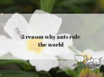 5 reasons why ants rule the world