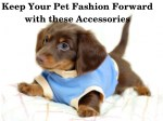 Use these Accessories to Keep Your Pet Fashion Forward