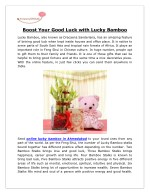 Buy Lucky Bamboo Online [happystems]