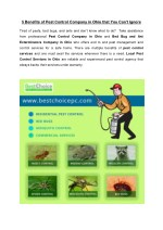 5 Benefits of Pest Control Company in Ohio that You Can't Ignore