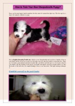 How to Train Your New Sheepadoodle Puppy?