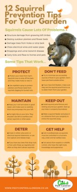 Pest Control Squirrels Infographic Guide