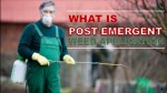 What Is Post-Emergent Weed Application