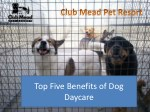 Top Five Benefits of Dog Daycare