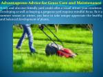 Advantageous Advice for Grass Care and Maintenance