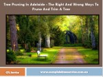 Tree Pruning In Adelaide - The Right And Wrong Ways To Prune And Trim A Tree
