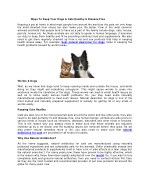 Perfect Ways To Keep Your Dogs & Cats Healthy & Disease Free