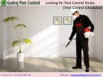 Looking for Pest Control Noida |Pest Control Ghaziabad