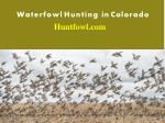 Duck and Goose Hunting in Colorado