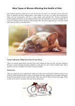 Main Types of Worms Affecting the Health of Pets