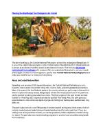 Planning the Best Budget Tour Packages in Jim Corbett