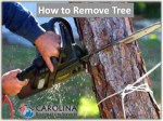 How to Remove Tree