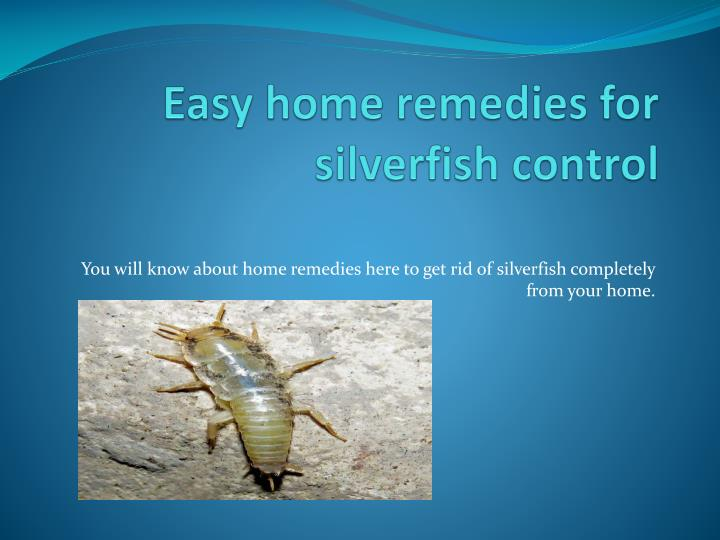 PPT - EASY HOME REMEDIES FOR SILVERFISH CONTROL PowerPoint