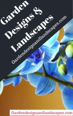 Drought tolerant landscaping Los Angeles