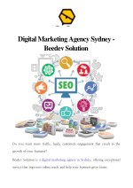 Digital Marketing Agency Sydney - Beedev Solution
