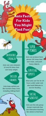 Ant Facts Infographic For Kids