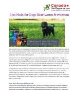 Best meds for Dogs Heartworm Prevention