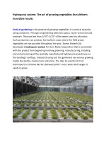 Hydroponic system: The art of growing vegetables that delivers incredible results