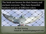 Bird control netting can be an efficient way to intercept birds.