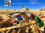 Guided Duck Hunt Colorado