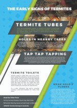The Early Signs of Termites
