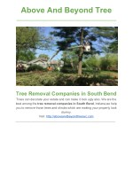 Tree Removal Companies in South Bend