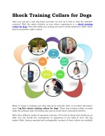 Shock Training Collars for Dogs