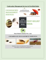 Cockroaches Management Services by Pest Relief India