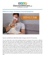 Halitosis in Dogs: Treatment, Causes & Symptoms