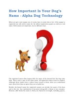 How Important Is Your Dog's Name - Alpha Dog Technology