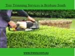 Tree Trimming Services in Brisbane South