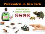 Pest Control in New York