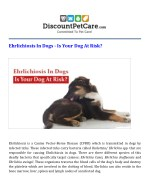 Ehrlichiosis In Dogs – Is Your Dog At Risk?