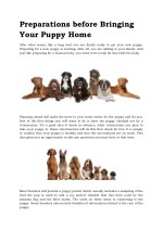 Preparations before Bringing Your Puppy Home
