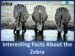 Interesting Facts About the Zebra