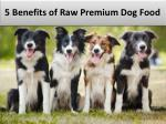 5 Benefits of Raw Premium Dog Food