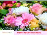 Flower Dilivery in Ludhiana