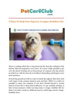 Ways To Help Your Dog Live a Longer, Healthier Life