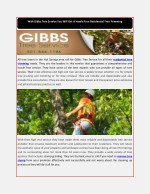 With Gibbs Tree Service You Will Get A Hassle Free Residential Tree Trimming