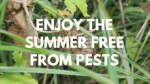Enjoy the Summer Free from Pests