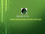Special deigned orchids pots shop from Green Barn Orchids Supplies