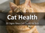 10 Signs Your Cat Could Be Sick