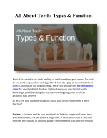 All About Teeth: Types & Function