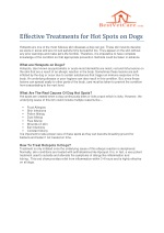 Effective Treatments for Hot Spots on Dogs- Apoquel