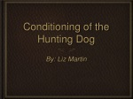 Conditioning of Hunting Dogs